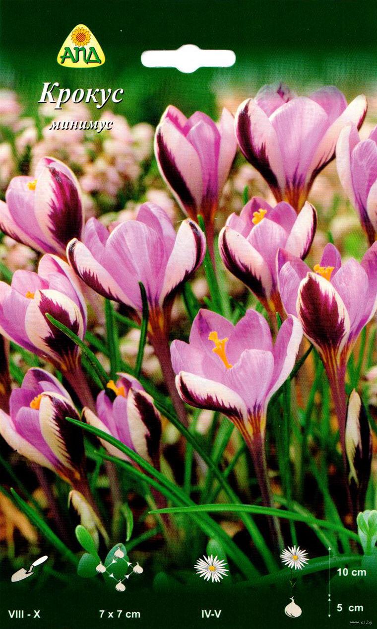 Купить цветы крокус минск купить dvd цветы для алжернона