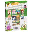 Насекомые. Энциклопедия для детского сада — фото, картинка — 4