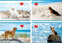 """Альбом для рисования """"Собаки и море"""" (24 листа)"""