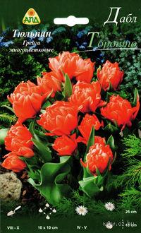 "Тюльпан Грейга многоцветковый ""Дабл Торонто"""