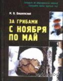 За грибами с ноября по май. Михаил Вишневский