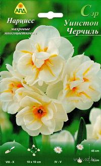 """Нарцисс махровый многоцветковый """"Сэр Уинстон Черчиль"""""""