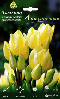 """Тюльпан простой поздний многоцветковый """"Антуанетта"""""""