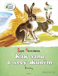 Как заяц в лесу живет