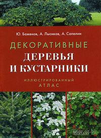 Декоративные деревья и кустарники. Юрий Баженов, Андрей Лысиков, Александр Сапелин