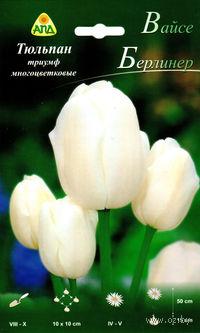 Тюльпан триумф многоцветковый