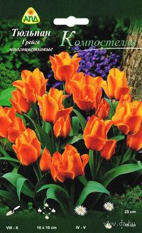 "Тюльпан Грейга многоцветковый ""Компостелла"""