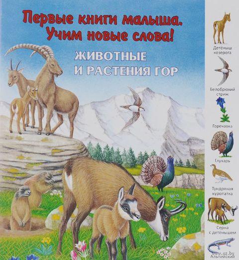 Животные и растения гор — фото, картинка