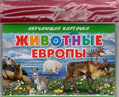 Животные Европы. Карточки (европодвес) — фото, картинка