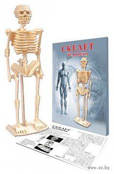 """Сборная модель из дерева """"Скелет человека"""" — фото, картинка"""