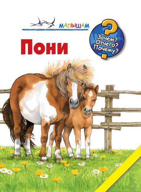 Пони — фото, картинка