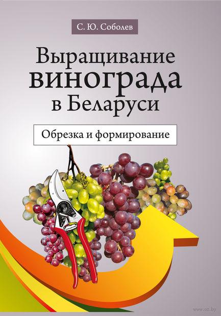 Выращивание винограда в Беларуси. Обрезка и формирование. Сергей Соболев