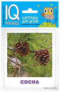 Деревья. Набор карточек для детей — фото, картинка