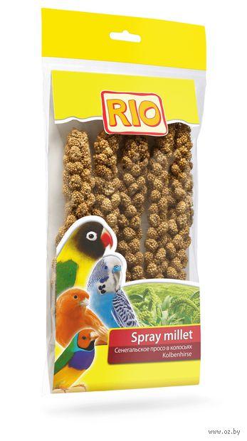 Лакомство для птиц (100 г; сенегальское просо) — фото, картинка