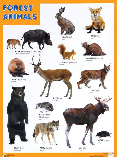 Forest Animals. Плакат — фото, картинка