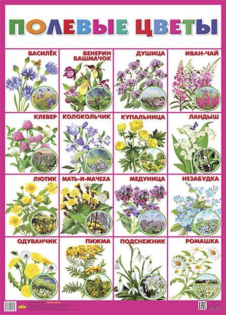 Плакат. Полевые цветы — фото, картинка
