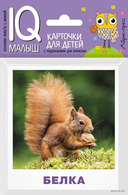Кто живёт в лесу? Набор карточек для детей — фото, картинка
