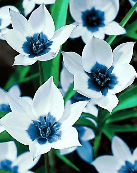 """Алмазная вышивка-мозаика """"Синеглазые тюльпаны"""" (380х480 мм) — фото, картинка"""