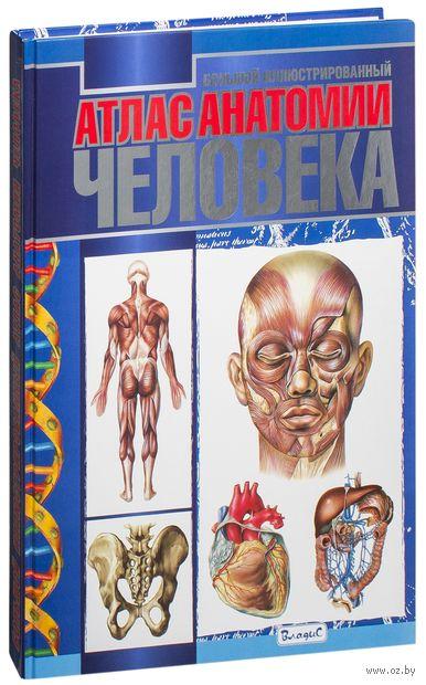 Большой иллюстрированный атлас анатомии человека — фото, картинка