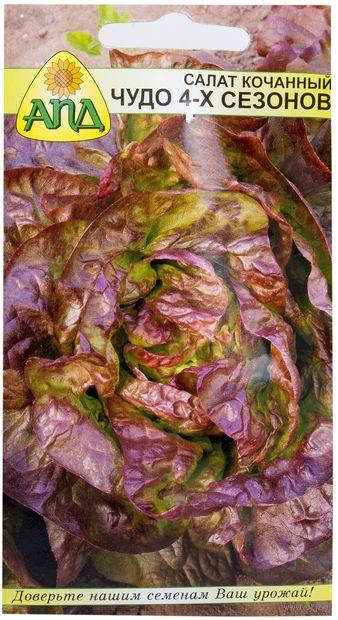 Как вырастить салат-лучшие сорта-фото