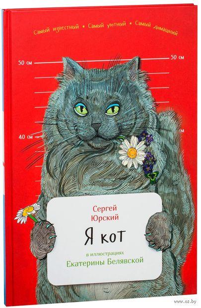 Я кот — фото, картинка