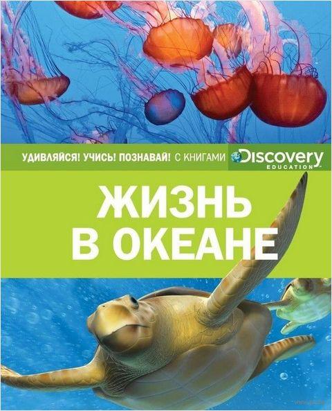 Жизнь в океане — фото, картинка