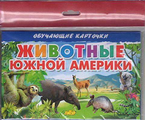 Животные Южной Америки. Карточки (европодвес) — фото, картинка