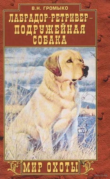 Лабрадор-ретривер - подружейная собака — фото, картинка