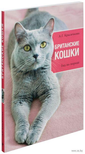 Британские кошки. Анастасия Красичкова