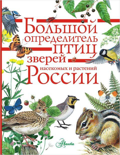 Большой определитель зверей, амфибий, рептилий, птиц, насекомых и растений России — фото, картинка