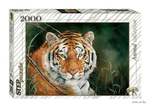 """Пазл """"Тигр"""" (2000 элементов) — фото, картинка"""