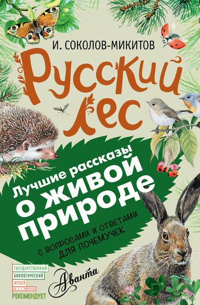 Русский лес — фото, картинка