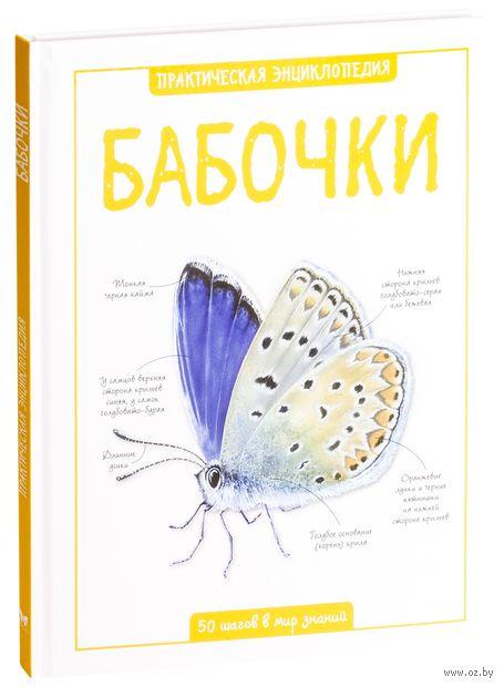 Бабочки — фото, картинка