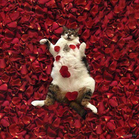 Открытка «Кот в лепестках» — фото, картинка