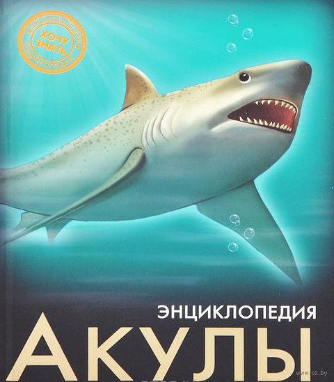 Акулы. Энциклопедия — фото, картинка