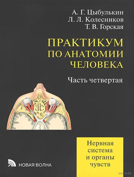 Практикум по анатомии человека. Часть 4. Нервная система и органы чувств (в 4 частях)