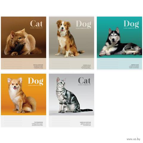 """Тетрадь в клетку 48 листов """"Питомцы. Cat/Dog"""""""