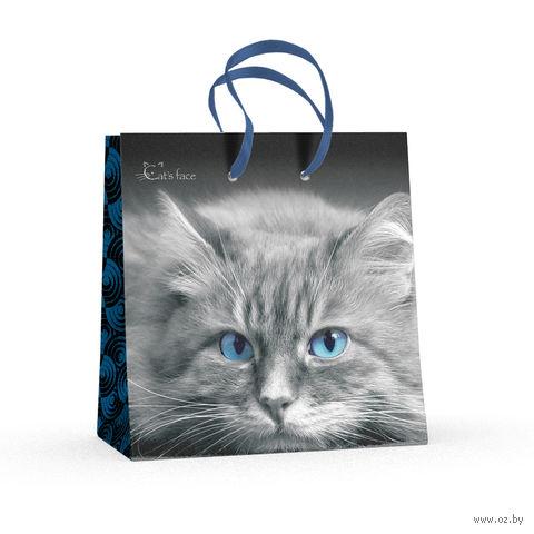 """Пакет бумажный подарочный """"Кошки. Яркий взгляд"""" (16,5x16,5x9,2 см) — фото, картинка"""