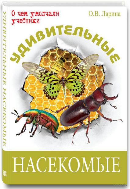 Удивительные насекомые — фото, картинка