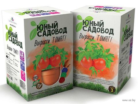 """Набор для выращивания растений """"Юный садовод. Томат"""" — фото, картинка"""