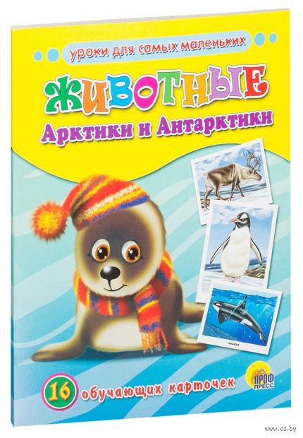 Животные Арктики и Антарктики. 16 обучающих карточек