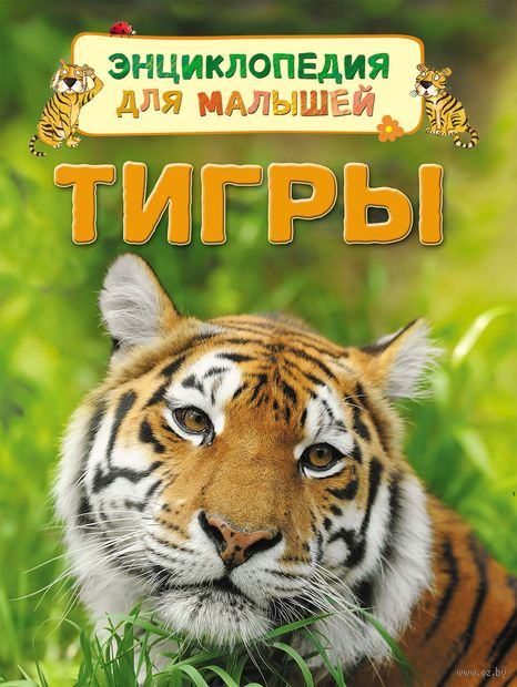 Тигры — фото, картинка