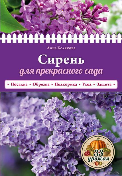 Сирень для прекрасного сада. Анна Белякова
