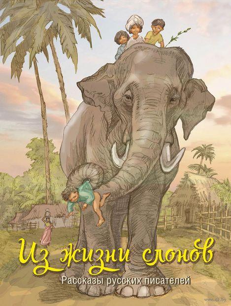 Из жизни слонов — фото, картинка