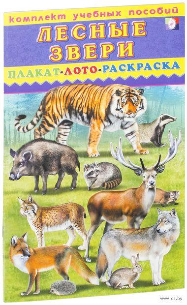 Комплект учебных пособий. Лесные звери. Плакат. Лото. Раскраска — фото, картинка