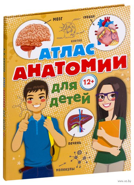 Атлас анатомии для детей — фото, картинка