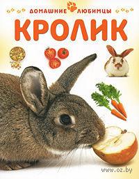 Кролик. Мэтью Рейнер