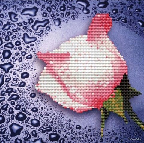 "Алмазная вышивка-мозаика ""Белая роза"" (250х250 мм) — фото, картинка"