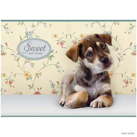 """Альбом для рисования """"Sweet Pets"""" (А4; 24 листа)"""
