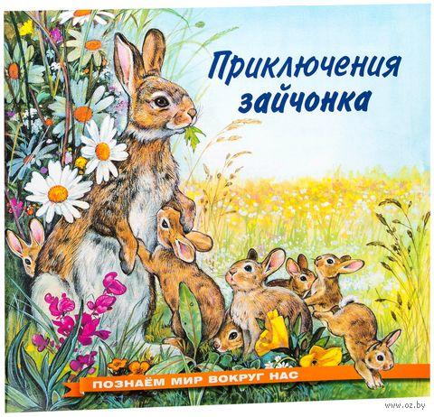 Приключения зайчонка — фото, картинка